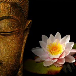 buddha-wallpapers-photos-pictures-h2o-lily1